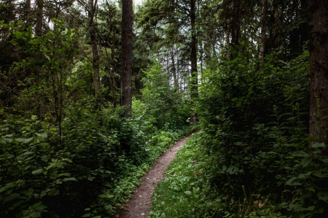 Amisk Wuche Hiking Trail at Elk Island National Park, Alberta  - Tracey Sawatzky, Adventure Photographer