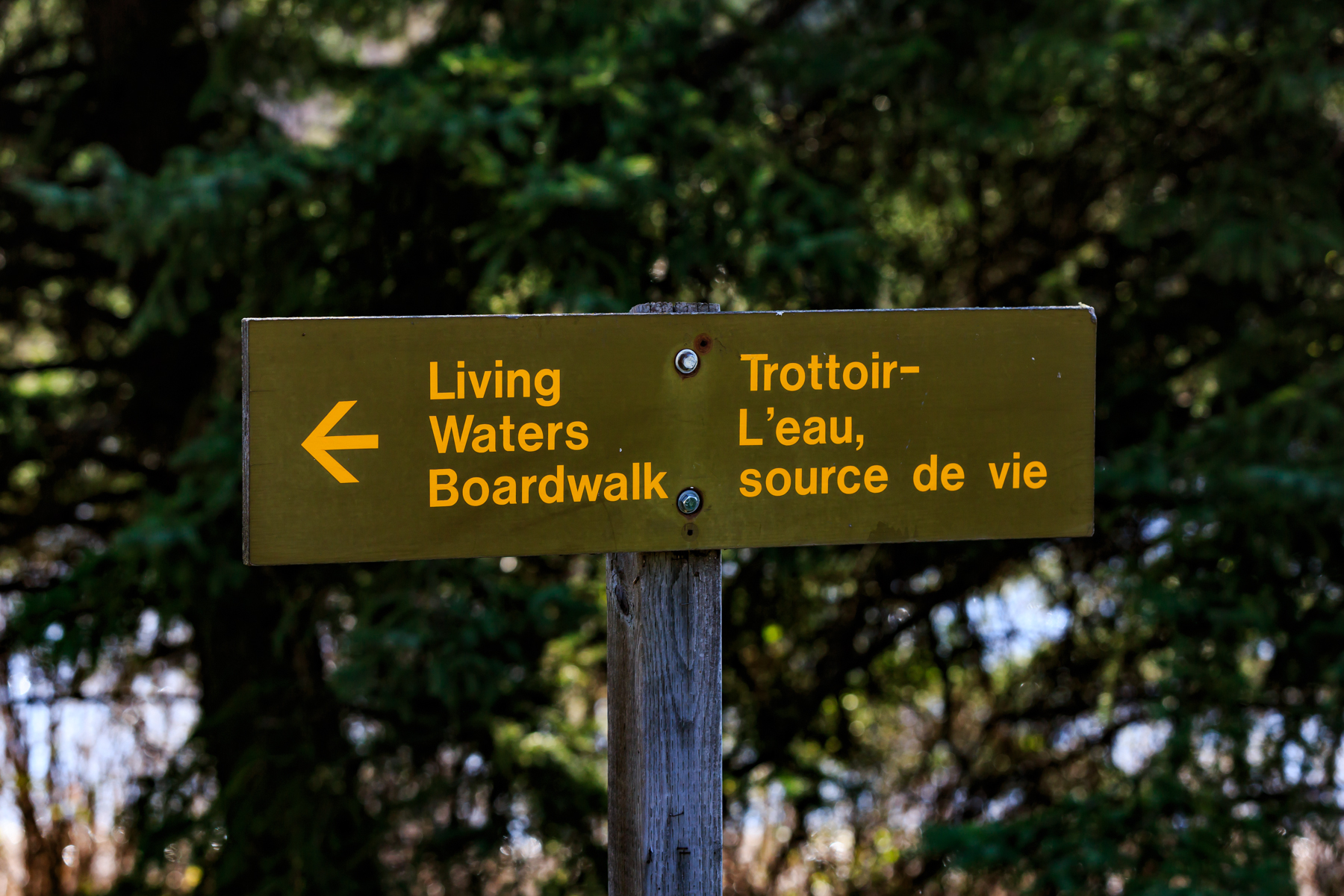 Living waters boardwalk Elk Island National Park Alberta