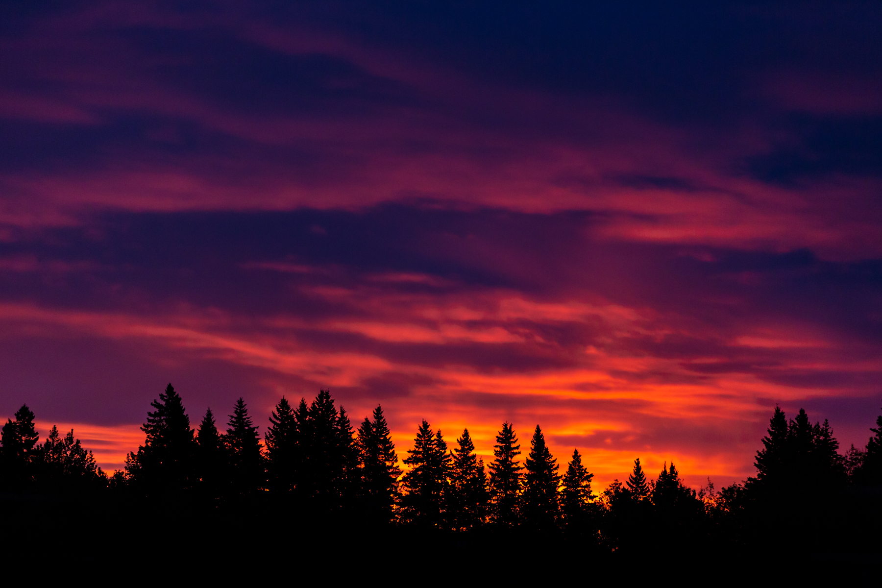 bright, vivid sunrise with silhouette of evergreen trees