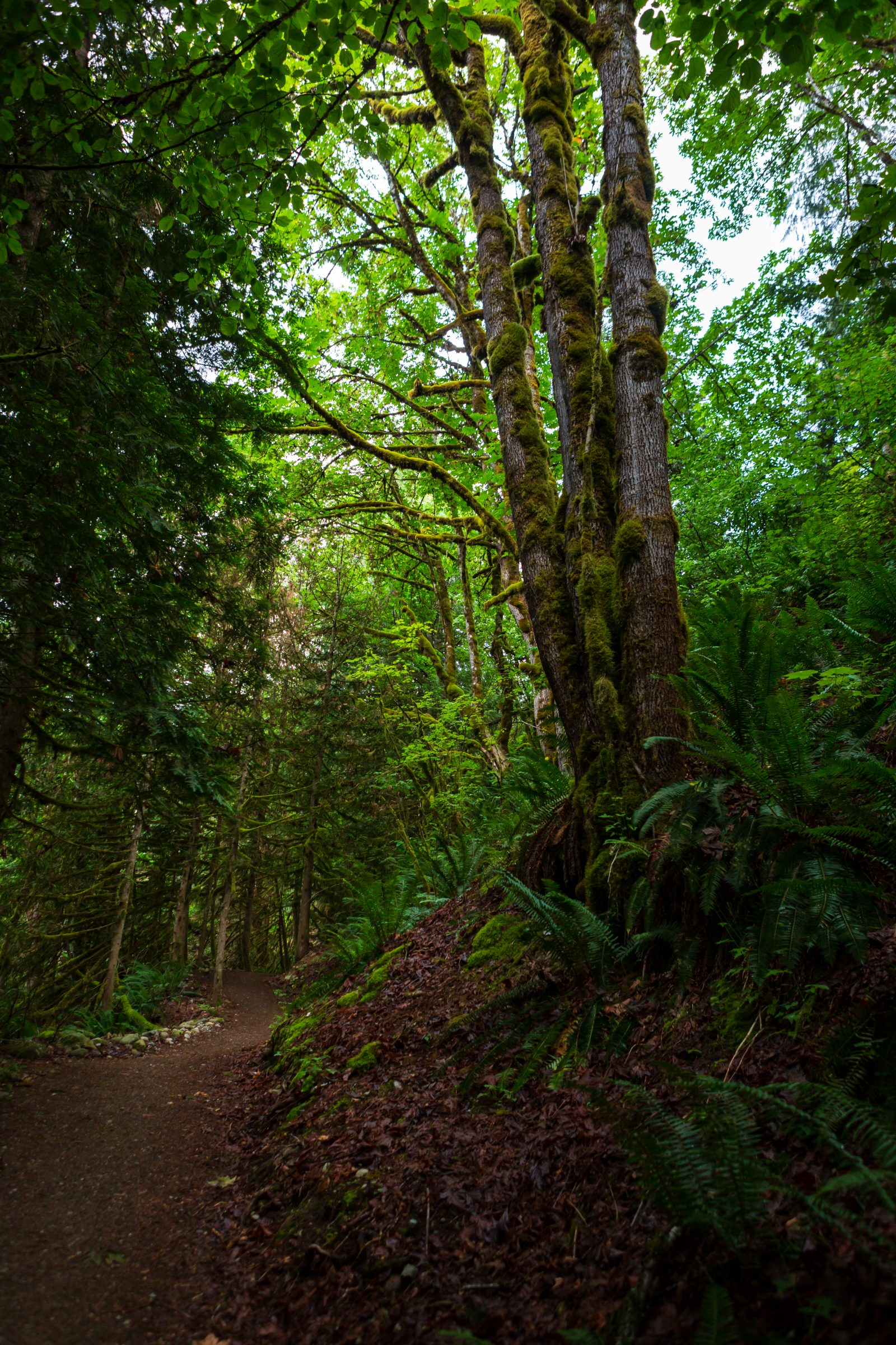 Trans Canada Trail - Hope, British Columbia  - Tracey Sawatzky, Adventure Photographer