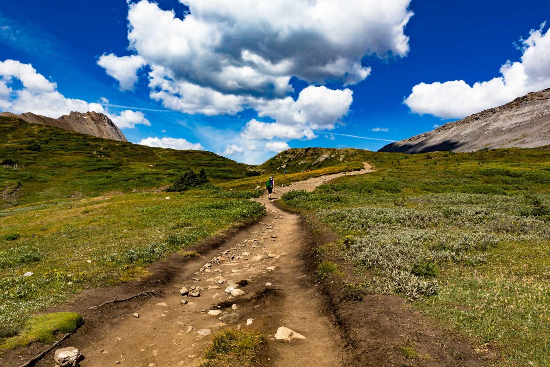 Hiking trail on Wilcox Pass - Jasper, Alberta  - Tracey Sawatzky, Adventure Photographer