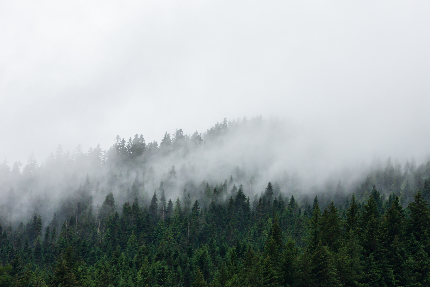 Foggy Trees on the Coquihalla, British Columbia - Tracey Sawatzky, Adventure Photographer