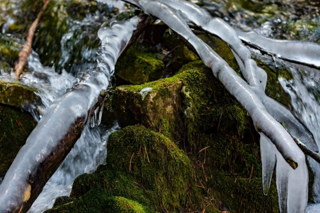Ice on a Mossy Stream - Kananaskis, Alberta - Tracey Sawatzky, Adventure Photographer