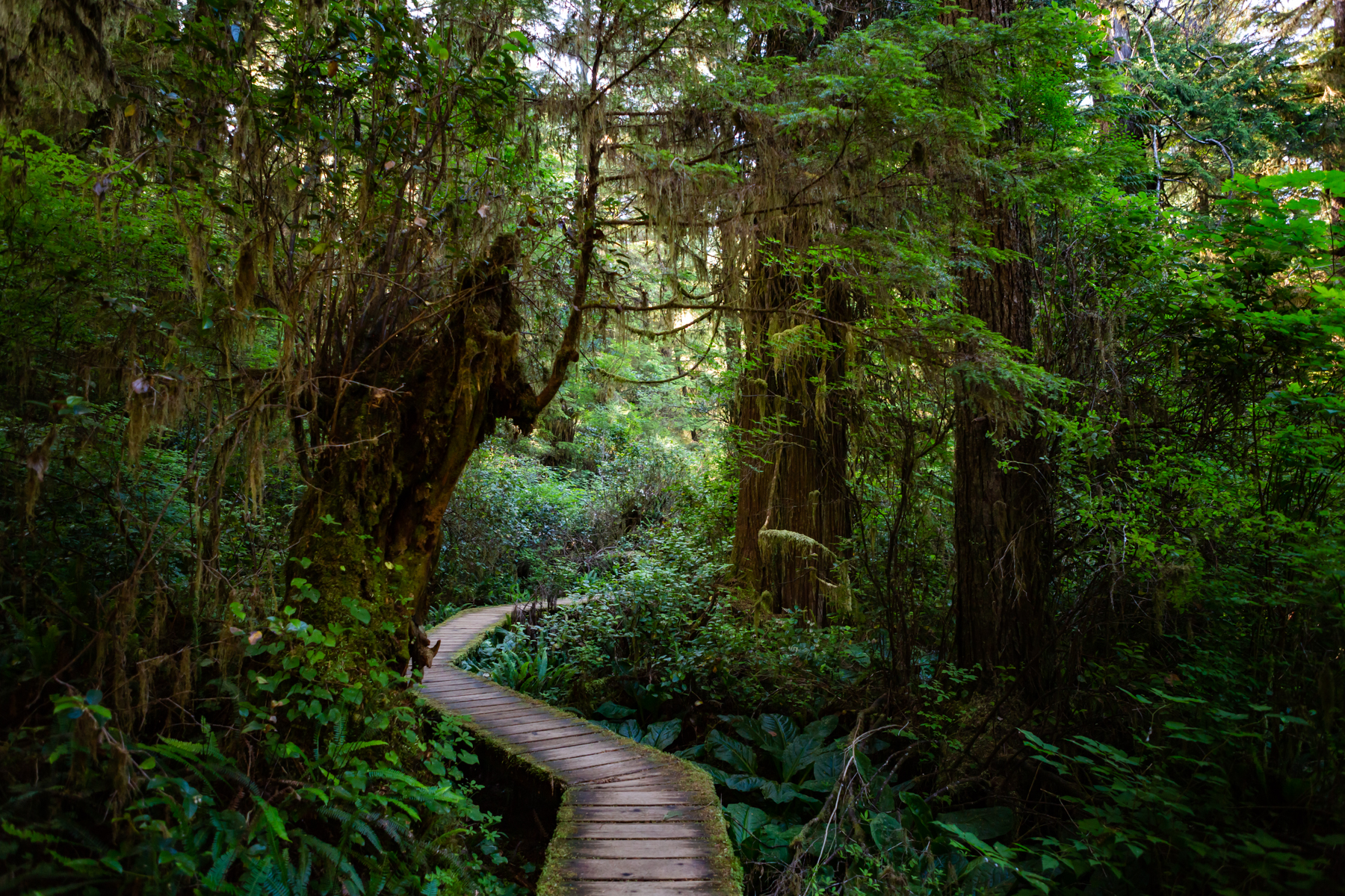 Rainforest with wooden pathway