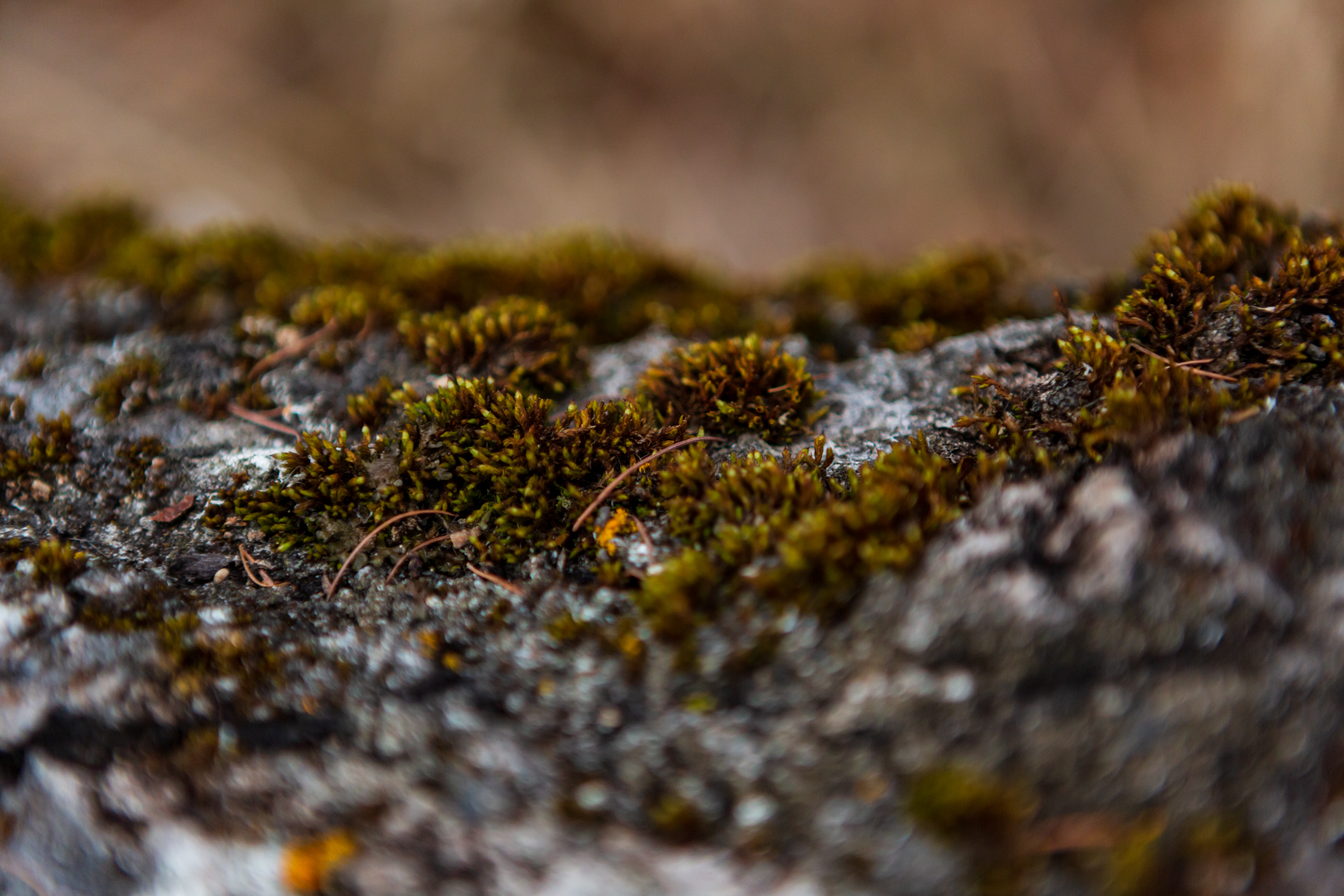 close up of moss on a fallen tree