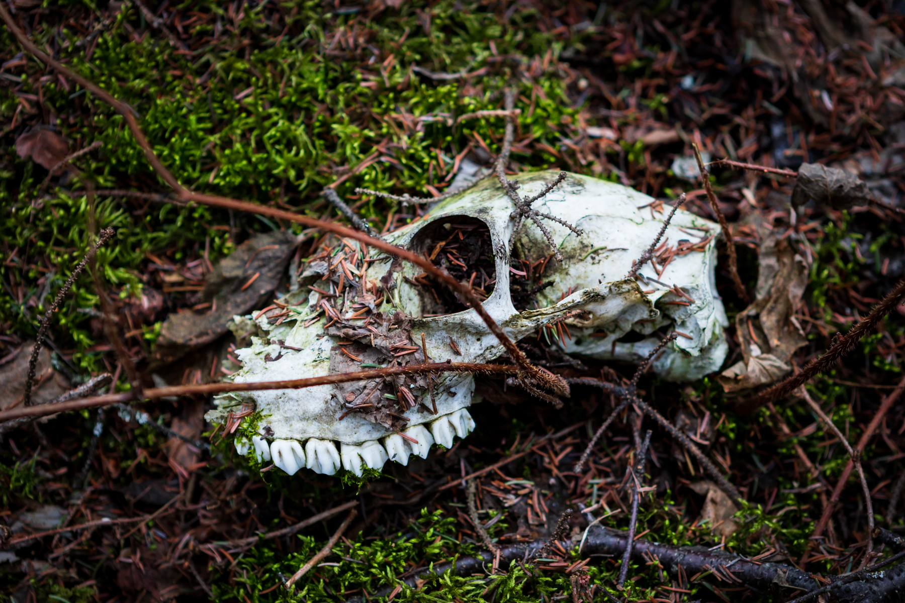 old skull in mossy ground