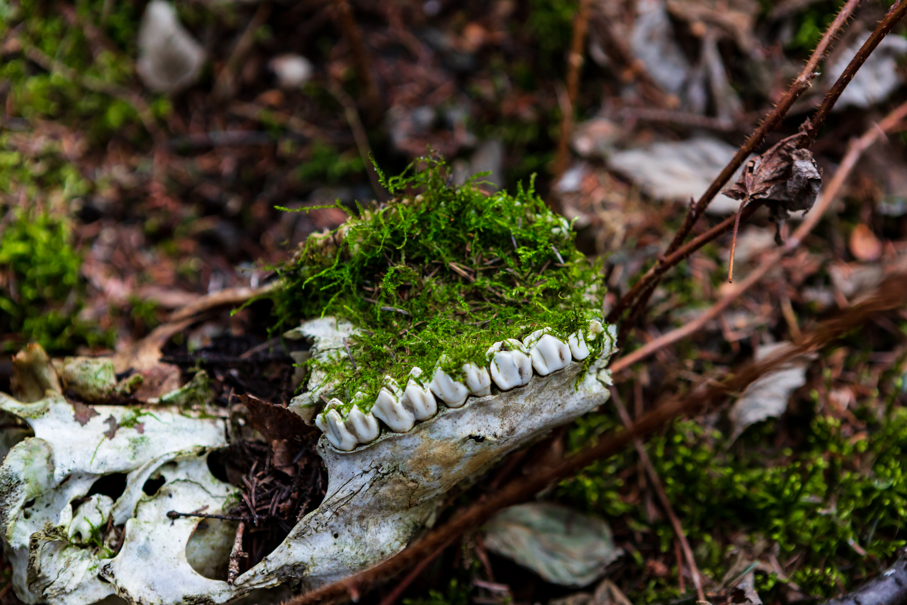 skull upside down with moss growing on roof of mouth