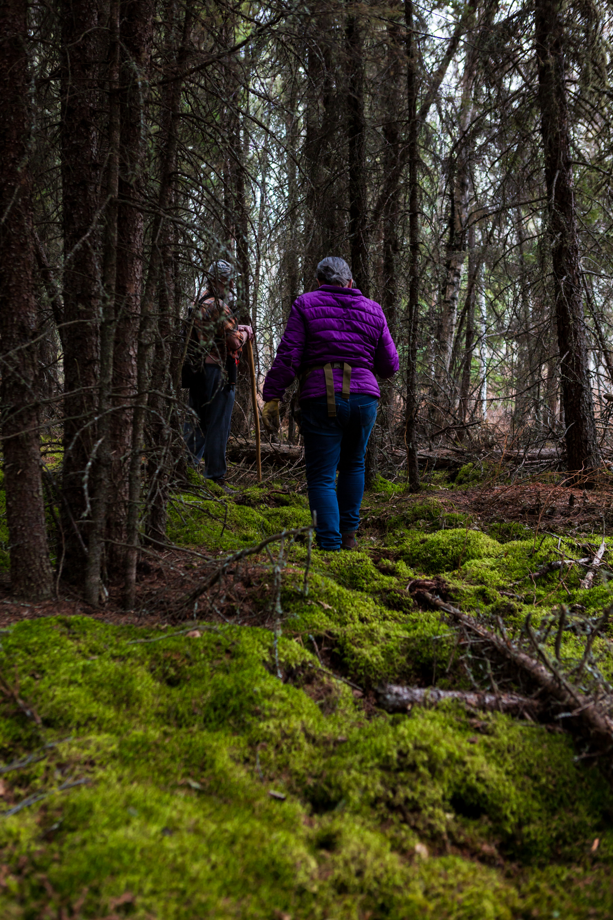 man and women off-trail hiking through mossy forest