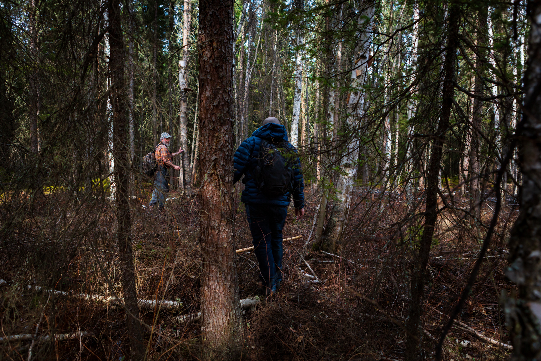 two men off-trail hiking through forest