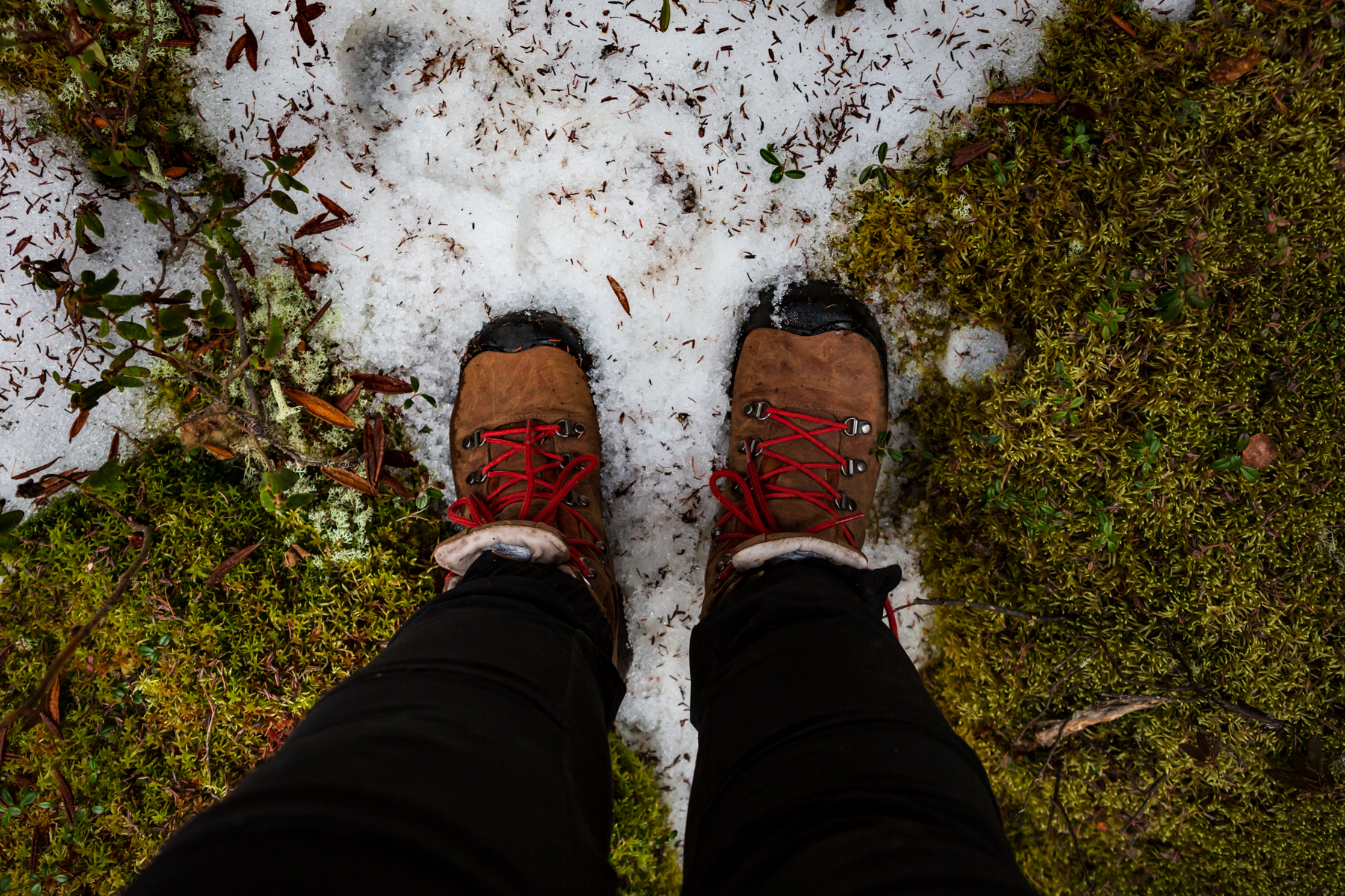 women (from knees down) in hiking boots standing on moss and snow as she is off-trail hiking