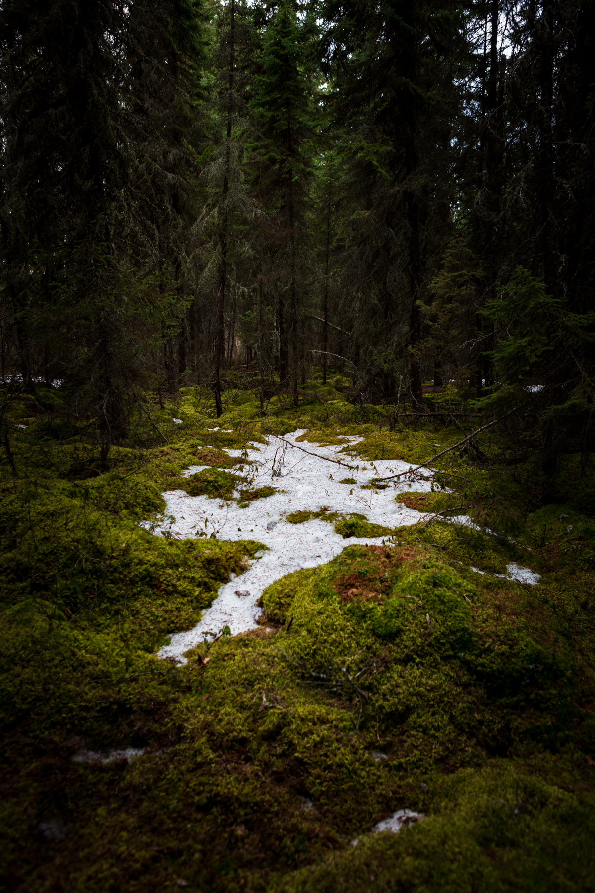 mossy forest with snow