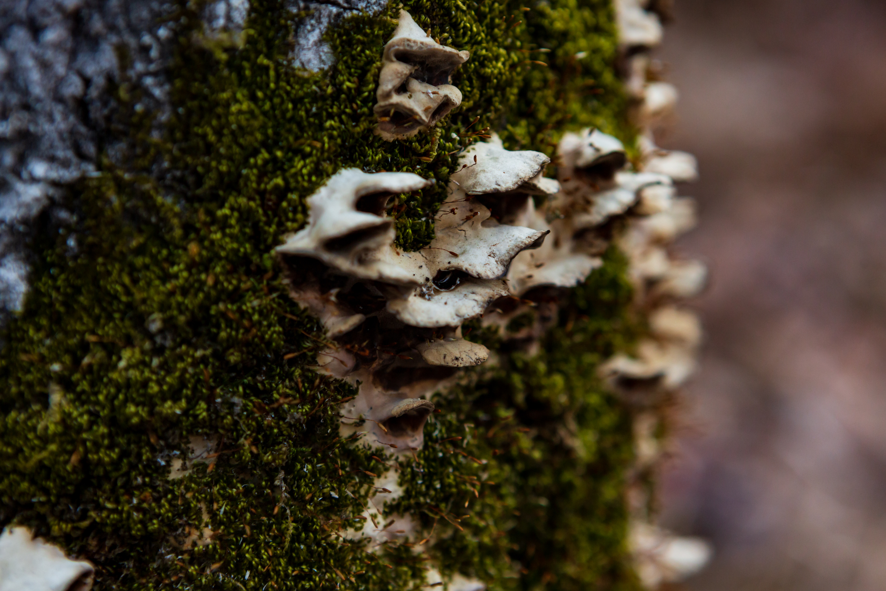 fungi growing on mossy tree