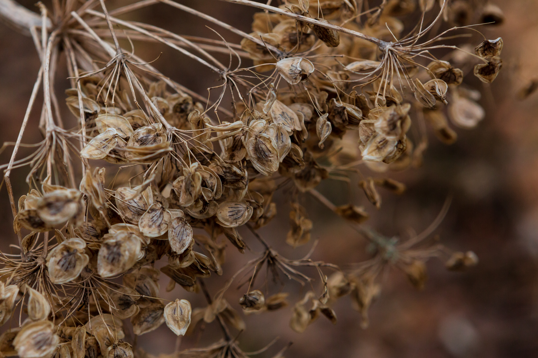 close up of dried plant